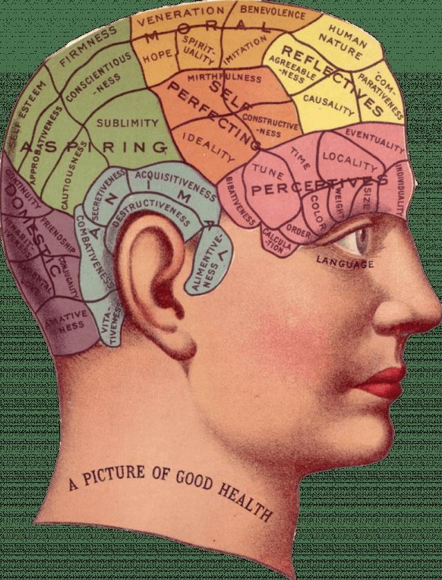 omega 3 sistema nervioso
